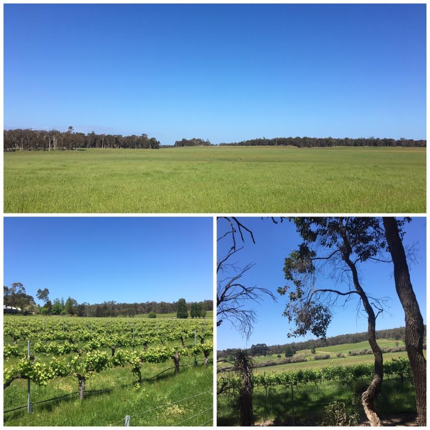 Miles of beautiful fields, grass bending in the breeze